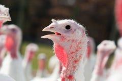 Die Türkei Stockbild