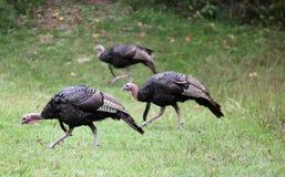 Die Türkei Stockfotos
