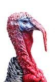 Die Türkei-Kopf getrennt auf Weiß Stockbilder