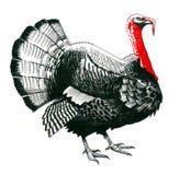 Die Türkei-Skizze stock abbildung