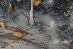 Die Tatze des Hundes auf der Natur Lizenzfreies Stockbild