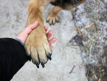 Die Tatze des Hundes in der Hand des Mädchens Lizenzfreie Stockfotografie