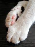 Die Tatzen der Katze stockfotografie