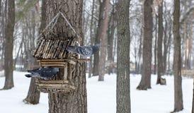 Die Taube an einem Futtertrog im Winter lizenzfreies stockbild
