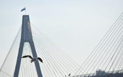Die Taube fliegt über eine ausgedehnte Brücke Lizenzfreies Stockfoto