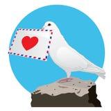 Die Taube mit einem Liebesbrief Stockfotos