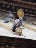 Die Taube und der Buddha Stockbilder