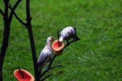Die Tauben lizenzfreie stockfotografie