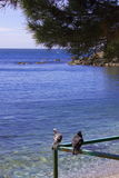 Die Tauben auf dem Meer Stockfotografie