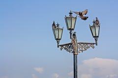 Die Tauben nahe alten Straßenlaterne Stockfotos