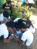 Die Teamwork des Studenten Stockbilder
