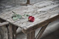 Die Terezin-Festung, eine Blume auf dem Tisch, wo vor einigen Jahren sie schrecklich war stockfoto