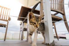 Die thailändische Katze, die mit Himmel stehen und die Sonne erweitern sich Lizenzfreies Stockbild