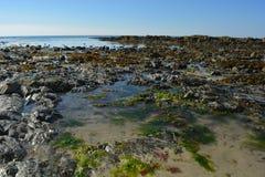 Die Tiere sind das Warten l'ocean erlöschen Stockbild