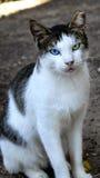 Die Tierhaustier-Katze Stockfoto