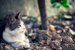 Die Tierhaustier-Katze Lizenzfreies Stockfoto