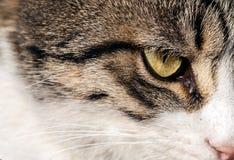 Die Tierhaustier-Katze Lizenzfreie Stockfotografie