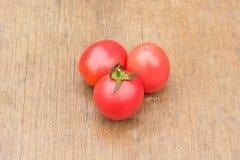Die Tomate (Nachtschatten Lycopersicum) Stockbilder