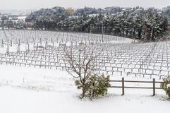 Die toskanische Landschaft und die Weinberge bedeckt durch Schnee, Pisa, Toskana, Italien lizenzfreies stockfoto