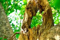Die toten Bäume fangen an, im Laufe der Zeit zu verfallen lizenzfreies stockbild