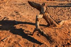 Die toten Wurzeln in der Wüste lizenzfreie stockbilder