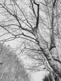 Die toten Zweige des Vorfrühlings stockbild