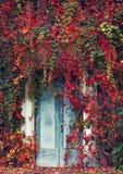 Die Tür mit wilden Trauben Stockfotos