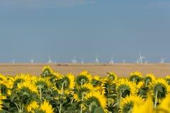 Die traditionelle Landwirtschaft stellt neue Technologie gegenüber, während dieses Sonnenblumenfeld einen Windpark in Süd-Rumänie lizenzfreies stockfoto