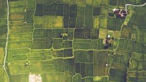 Die traditionelle Methode für Kultivierungsreis mit Flut die Felder nach der Einstellung von jungen Sämlingen Lizenzfreies Stockbild