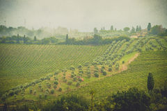 Die Traubenfelder in Toskana, Italien stockfotos