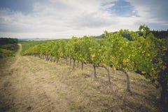 Die Traubenfelder in Toskana, Italien stockbild