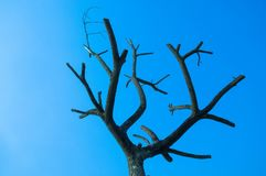Die tree with blue sky royalty free stock photo