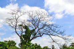 Die tree Stock Photos