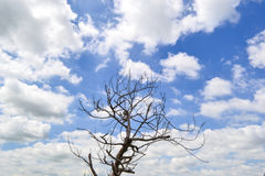 Die tree Royalty Free Stock Photo