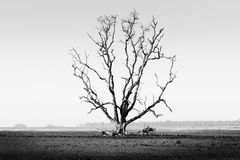 Die tree. Isolate - concept picture of bad enviroment in black and white tone stock images