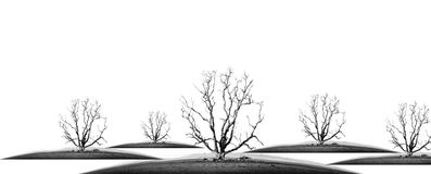 Die tree. Isolate - concept picture of bad enviroment in black and white tone royalty free stock photos
