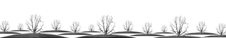 Die tree. Isolate - concept picture of bad enviroment in black and white tone Stock Photo
