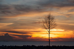 view beautiful Die tree in sunset sea landscape background,Silhouette style,vertical Royalty Free Stock Photos