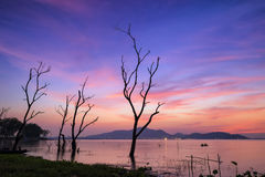 Die Trees In sunset. Die trees beside Bang-Pra lake of Chonburi province, Thailand during the sunset and purple twilight sky Royalty Free Stock Photos