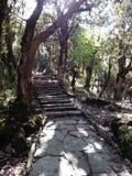 Die Trekkingsspur im Wald, Nepal Stockfotos