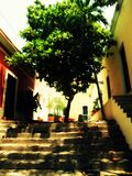 Die Treppe zum Baum Lizenzfreie Stockbilder