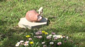 Die Trieb der süßen Kirsche in Marine Park von Bourgas in Bulgarien stock video