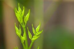 Die Triebe von Bäumen mit grünem Unschärfehintergrund Lizenzfreies Stockfoto
