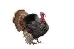 Die Türkei Lizenzfreie Stockfotos
