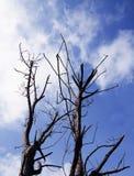 Die Trockenzeit Stockbild