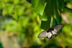 Die tropische Basisrecheneinheit lizenzfreies stockbild