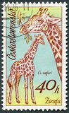 Die TSCHECHOSLOWAKEI - 1976: Shows Giraffen, afrikanische Tiere der Reihe in Zoo Dvur Kralove Lizenzfreie Stockfotos