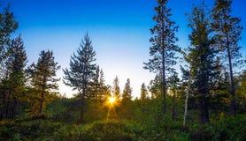 Die Tundra im Sommer Stockbild