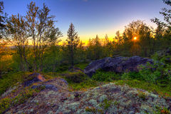 Die Tundra im Sommer Stockfotografie