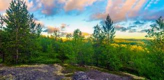 Die Tundra im Sommer Stockfoto